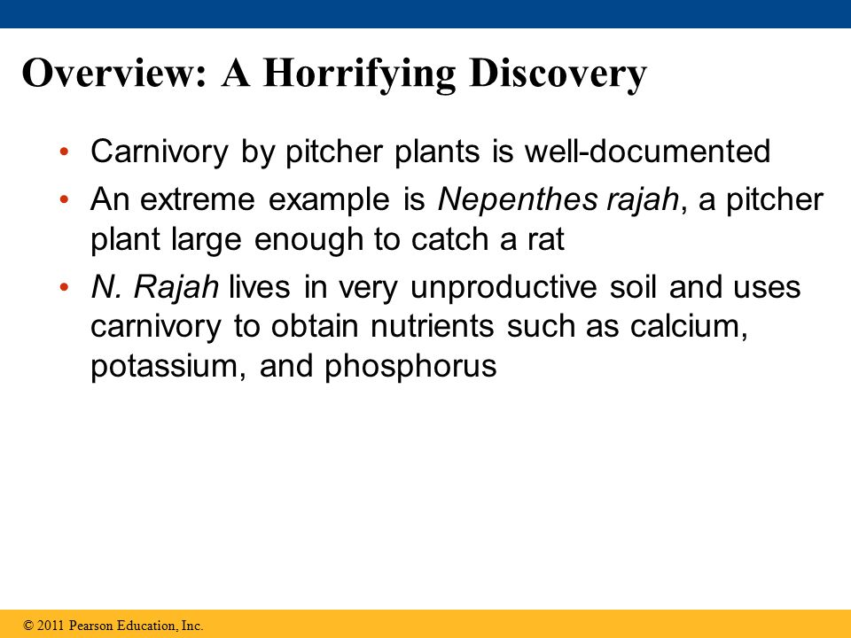 Overview: A Horrifying Discovery