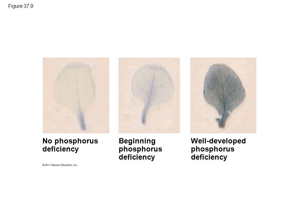 No phosphorus deficiency Beginning phosphorus deficiency