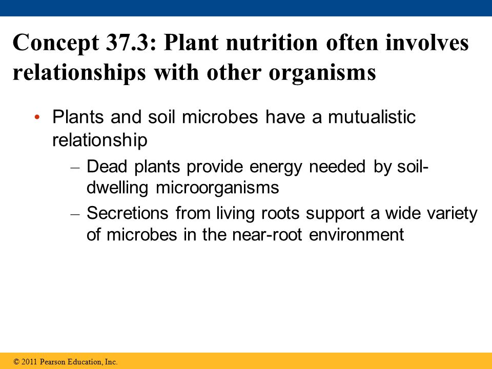 Concept 37.3: Plant nutrition often involves relationships with other organisms