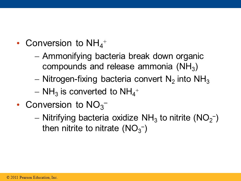 Conversion to NH4 Conversion to NO3–