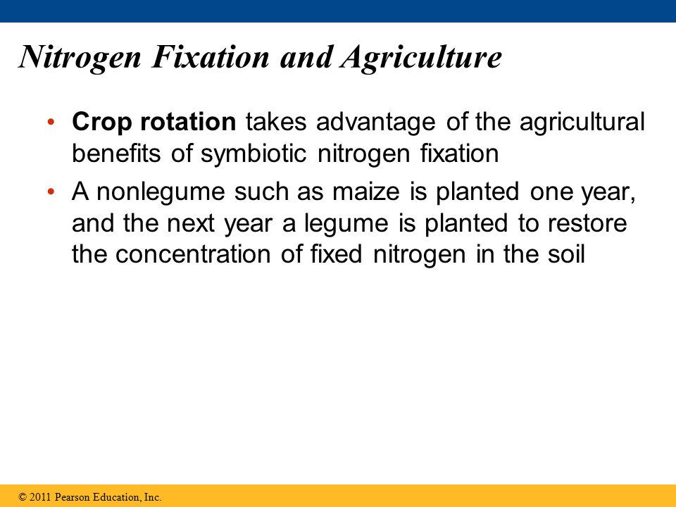 Nitrogen Fixation and Agriculture