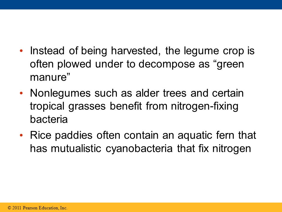 Instead of being harvested, the legume crop is often plowed under to decompose as green manure