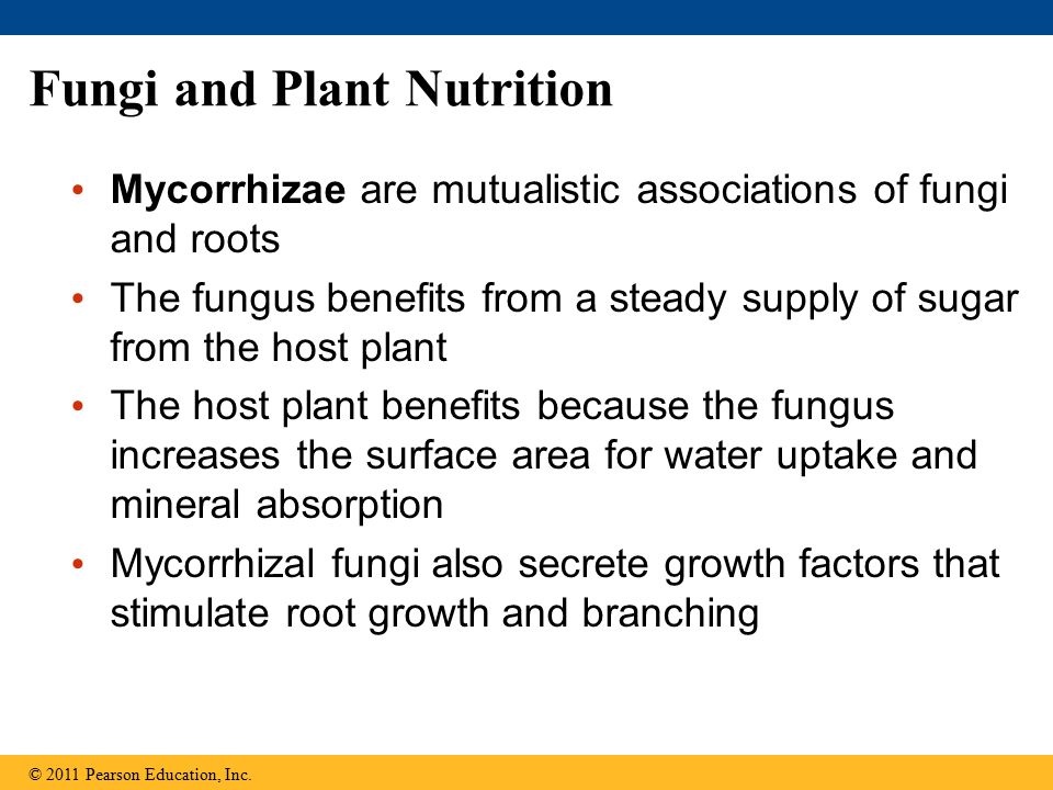 Fungi and Plant Nutrition