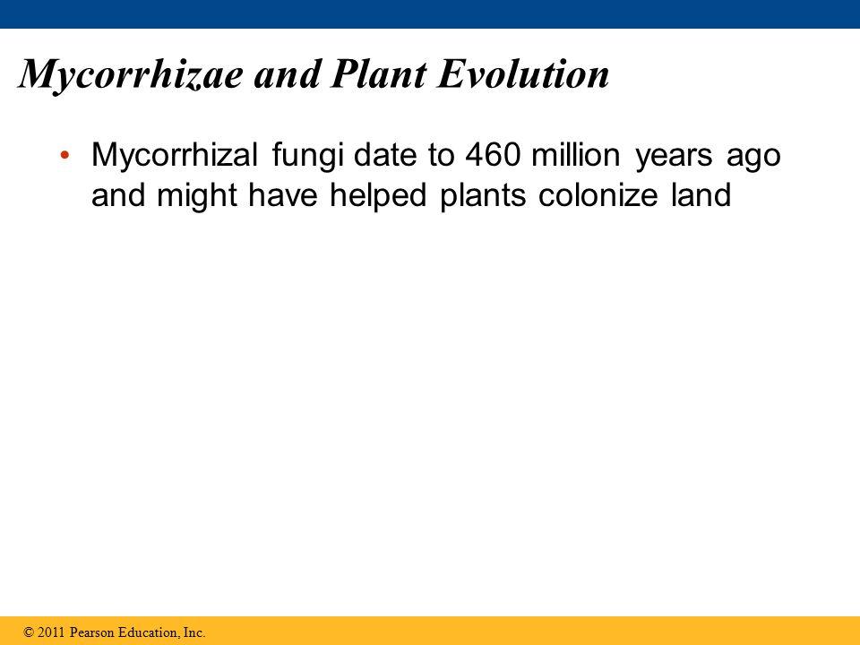 Mycorrhizae and Plant Evolution
