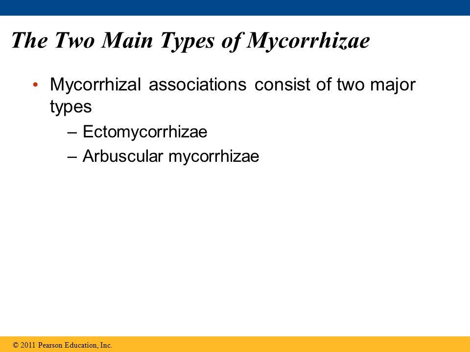 The Two Main Types of Mycorrhizae