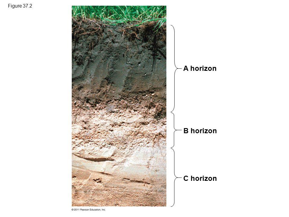 Figure 37.2 A horizon B horizon Figure 37.2 Soil horizons. C horizon