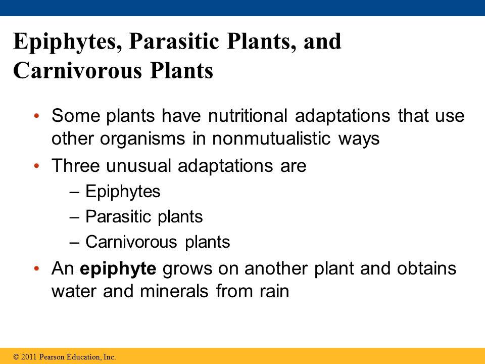 Epiphytes, Parasitic Plants, and Carnivorous Plants