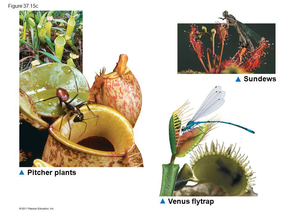 Sundews Pitcher plants Venus flytrap Figure 37.15c
