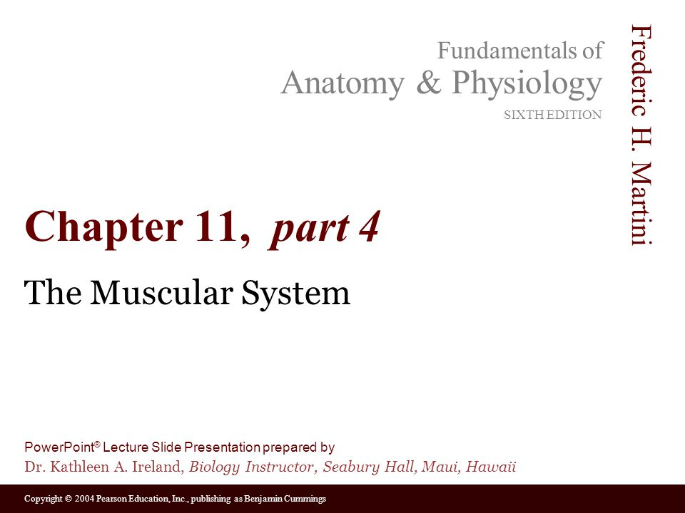 Chapter 11, part 4 The Muscular System
