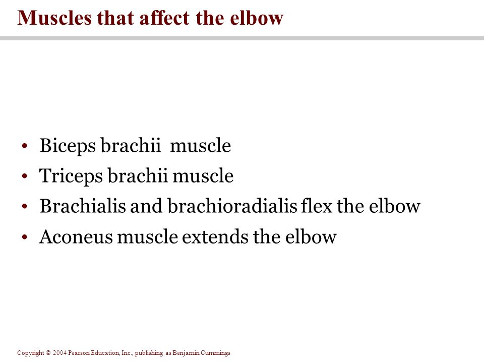 Muscles that affect the elbow