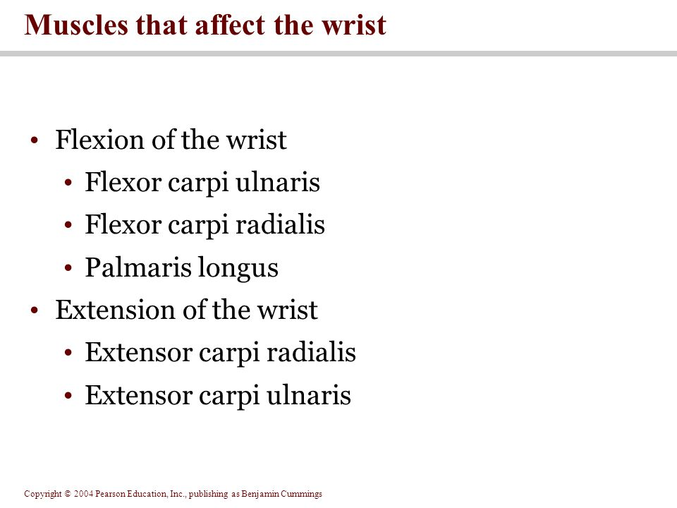 Muscles that affect the wrist