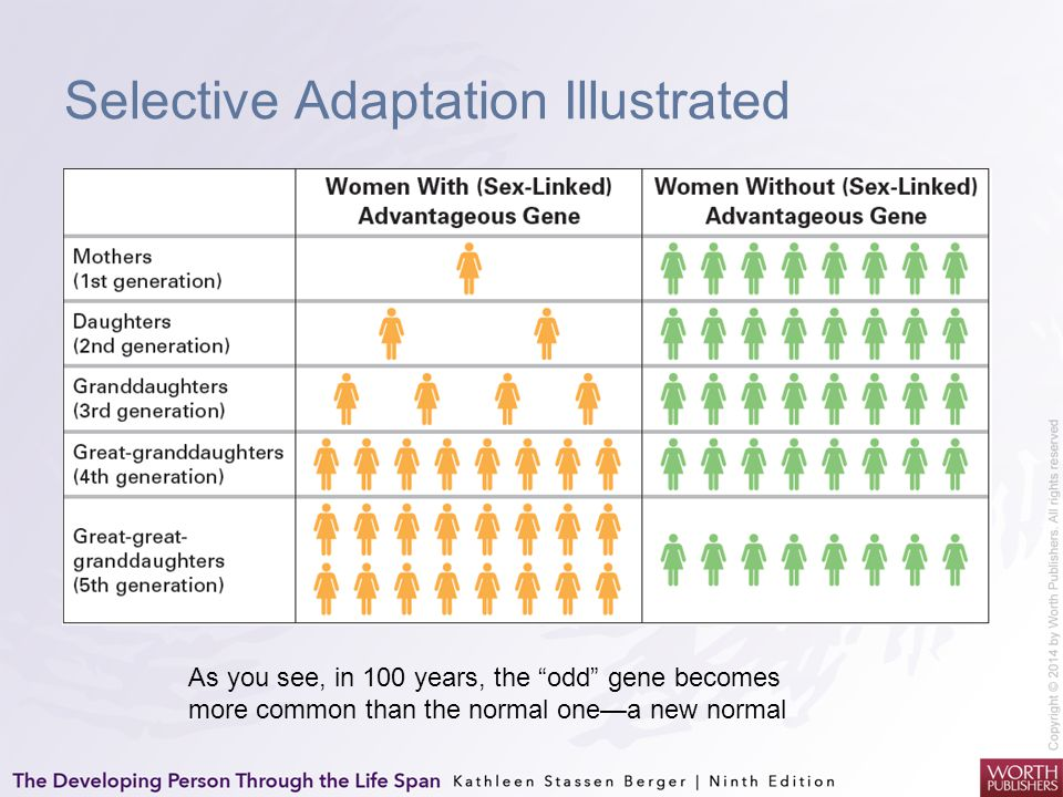 Selective Adaptation Illustrated