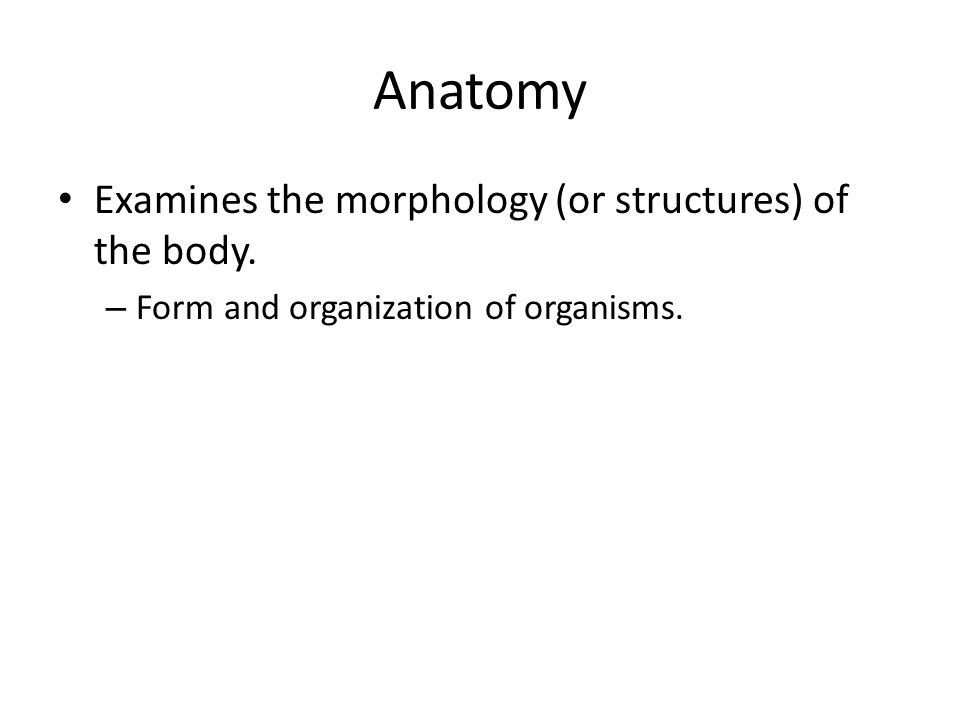Anatomy Examines the morphology (or structures) of the body.