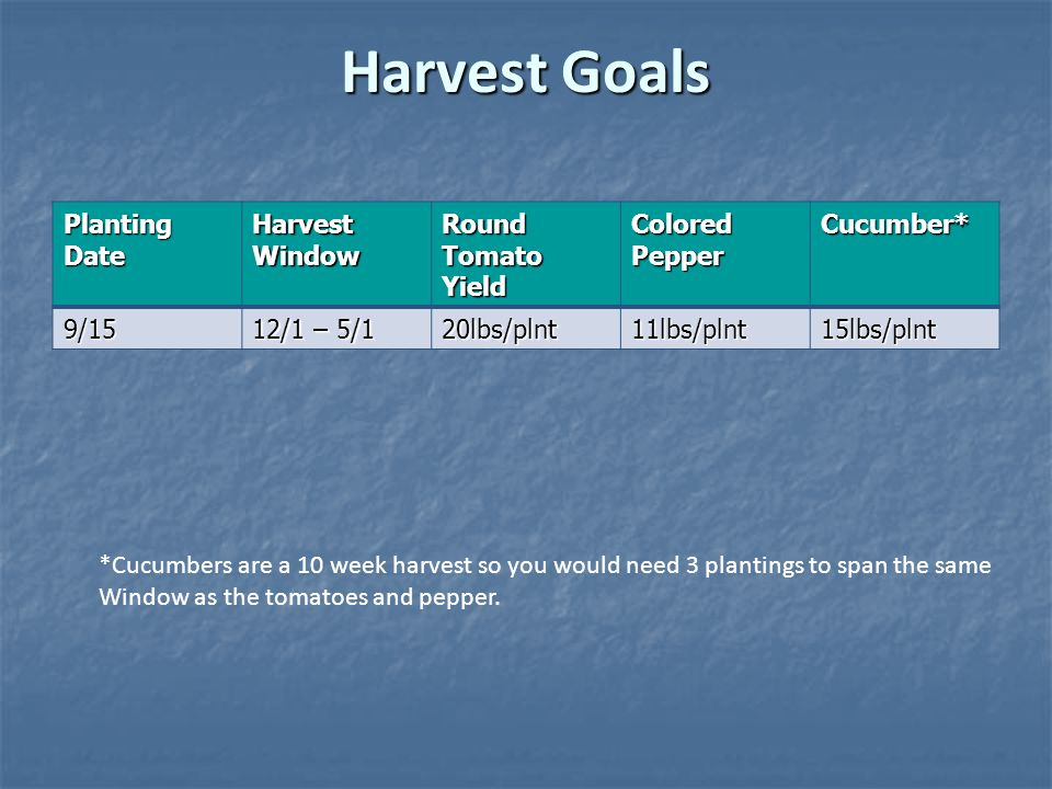 Harvest Goals Planting Date Harvest Window Round Tomato Yield