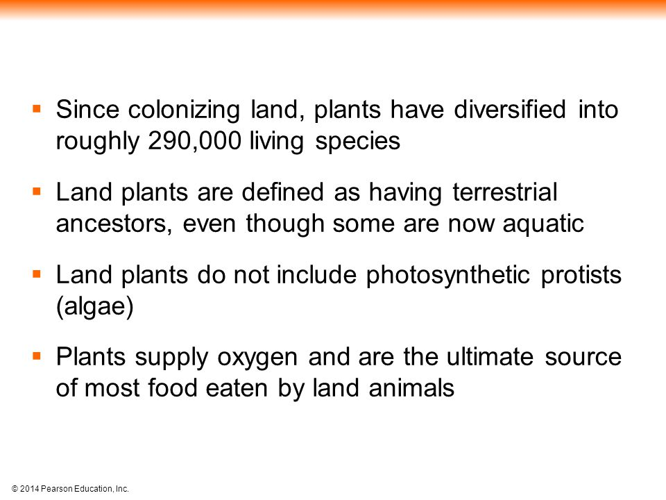 Since colonizing land, plants have diversified into roughly 290,000 living species