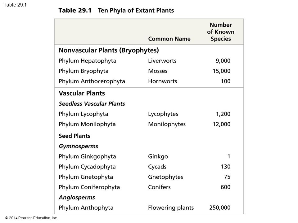 Table 29.1 Table 29.1 Ten phyla of extant plants