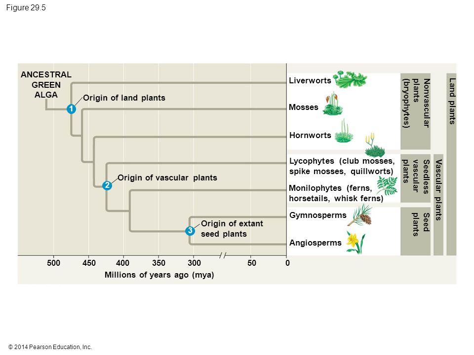 Nonvascular plants (bryophytes) Origin of land plants Land plants
