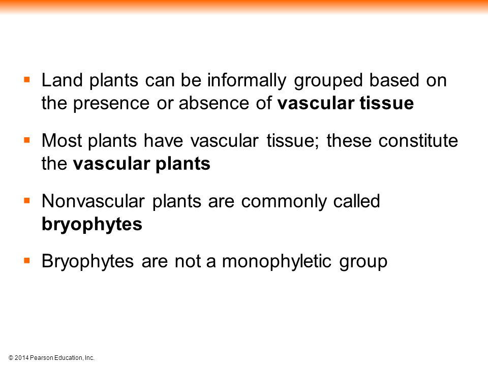 Land plants can be informally grouped based on the presence or absence of vascular tissue
