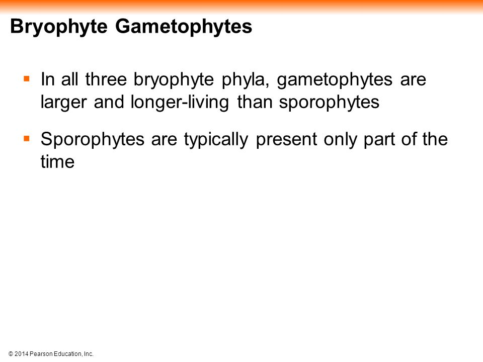 Bryophyte Gametophytes