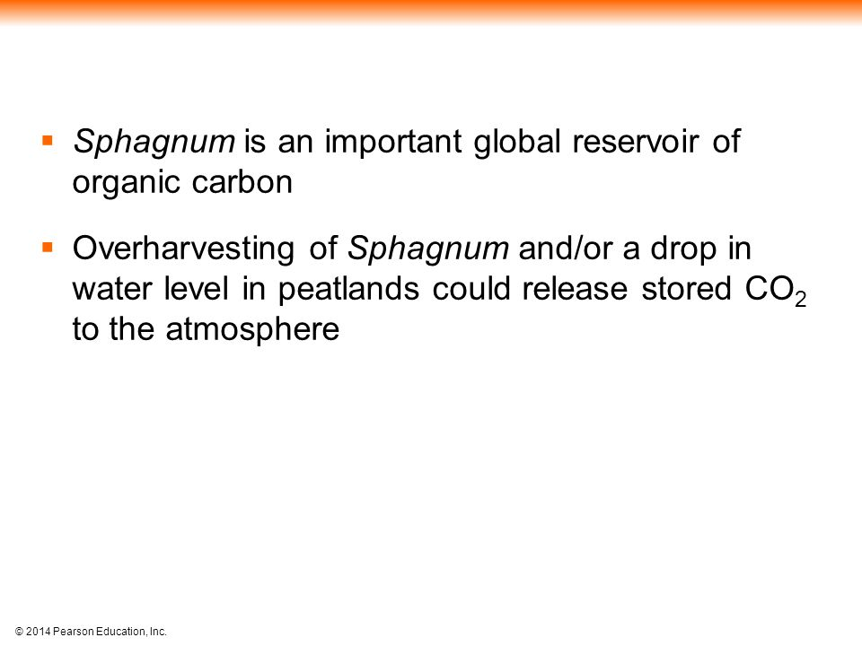 Sphagnum is an important global reservoir of organic carbon