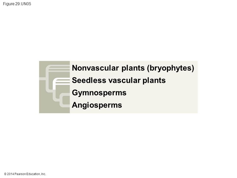 Nonvascular plants (bryophytes) Seedless vascular plants Gymnosperms