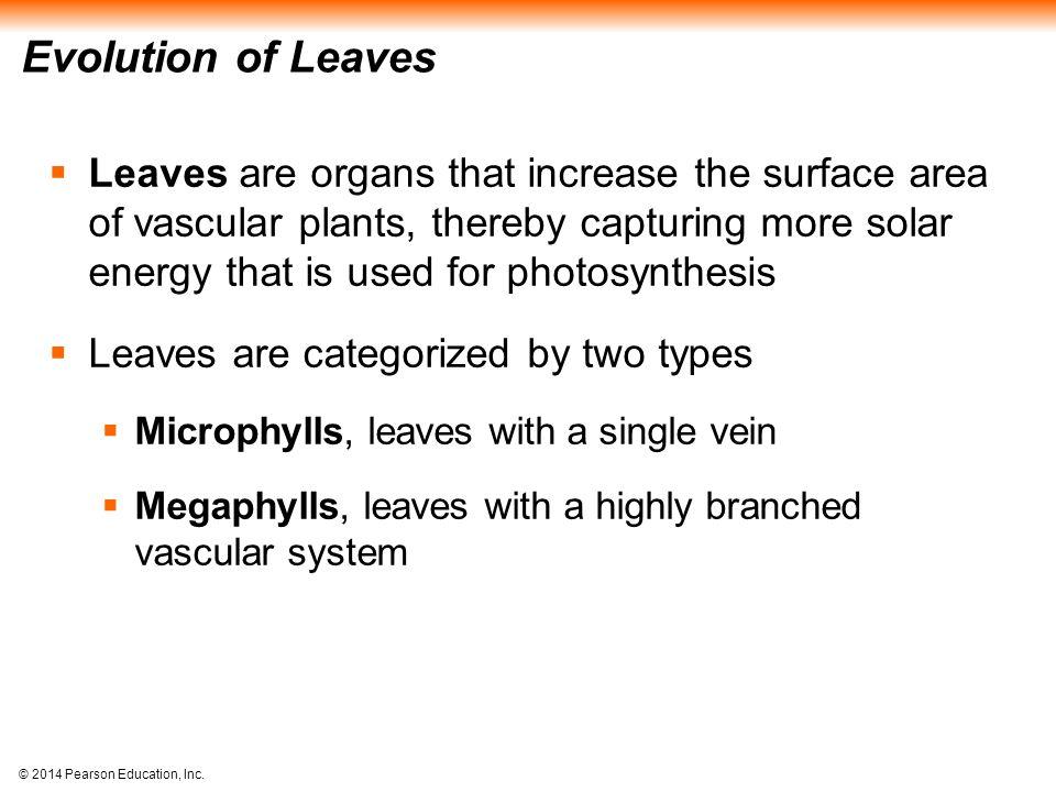 Evolution of Leaves