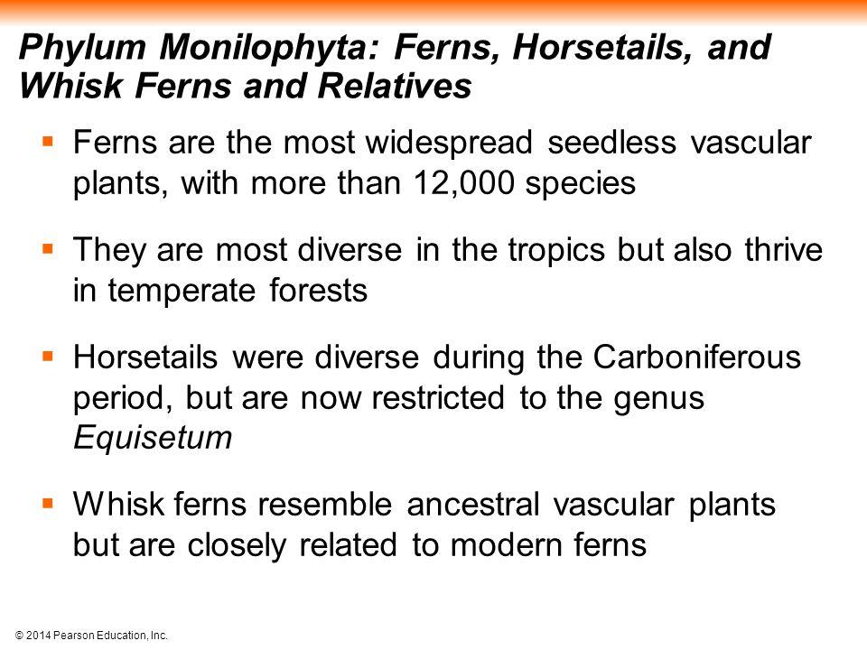 Phylum Monilophyta: Ferns, Horsetails, and Whisk Ferns and Relatives
