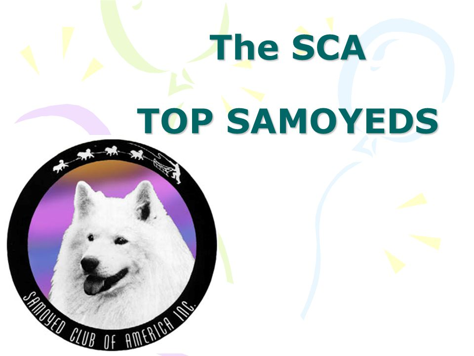 The SCA TOP SAMOYEDS