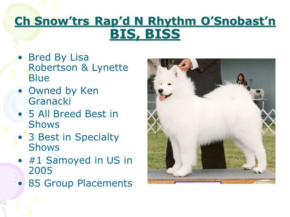 Ch Snow'trs Rap'd N Rhythm O'Snobast'n BIS, BISS