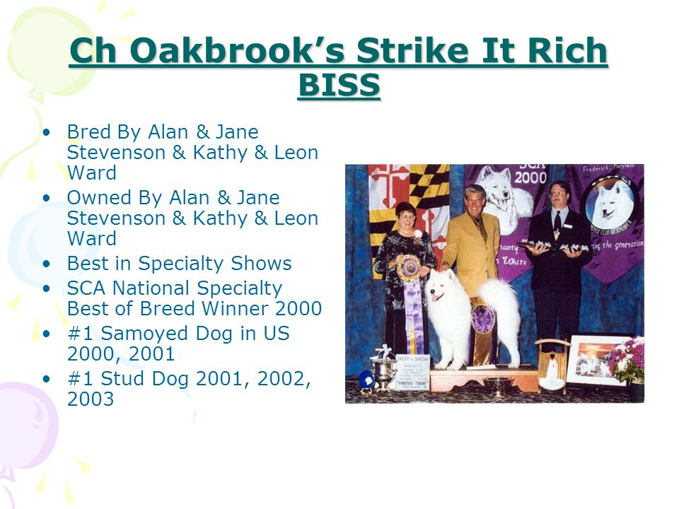Ch Oakbrook's Strike It Rich BISS