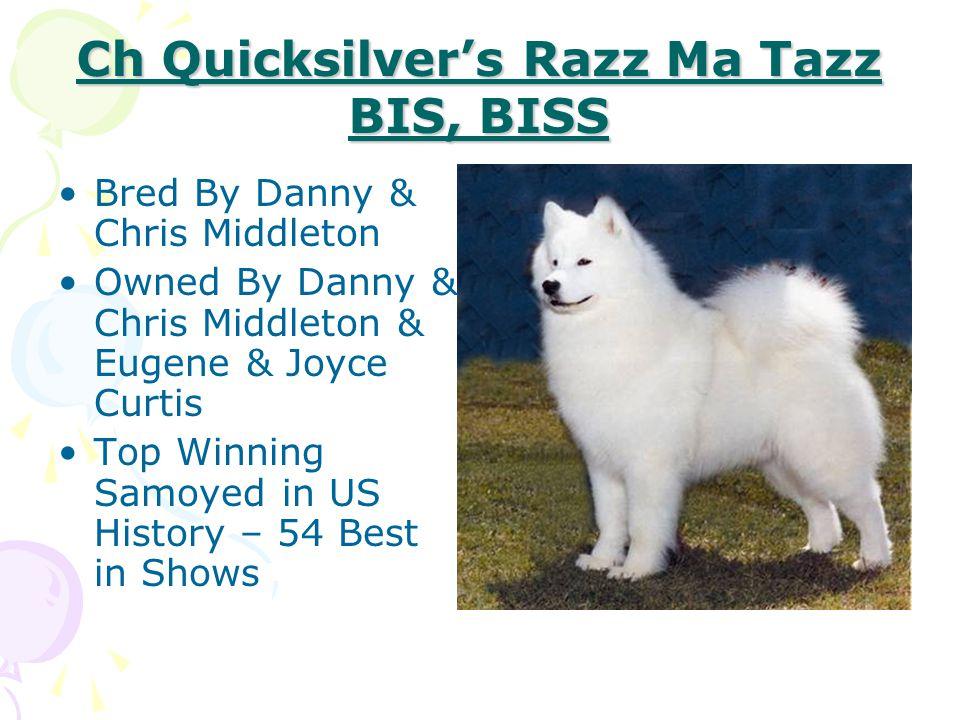 Ch Quicksilver's Razz Ma Tazz BIS, BISS