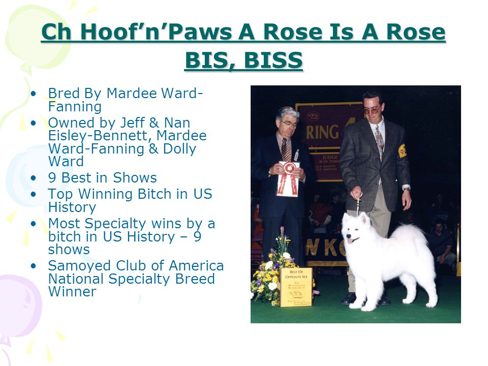Ch Hoof'n'Paws A Rose Is A Rose BIS, BISS