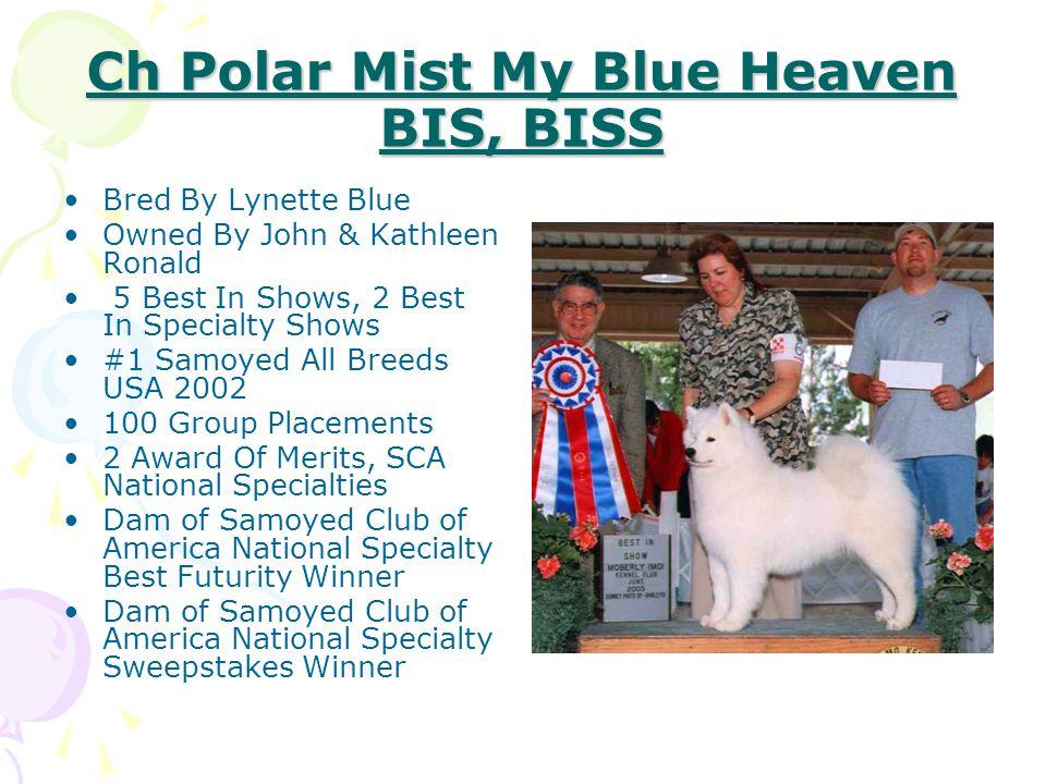 Ch Polar Mist My Blue Heaven BIS, BISS