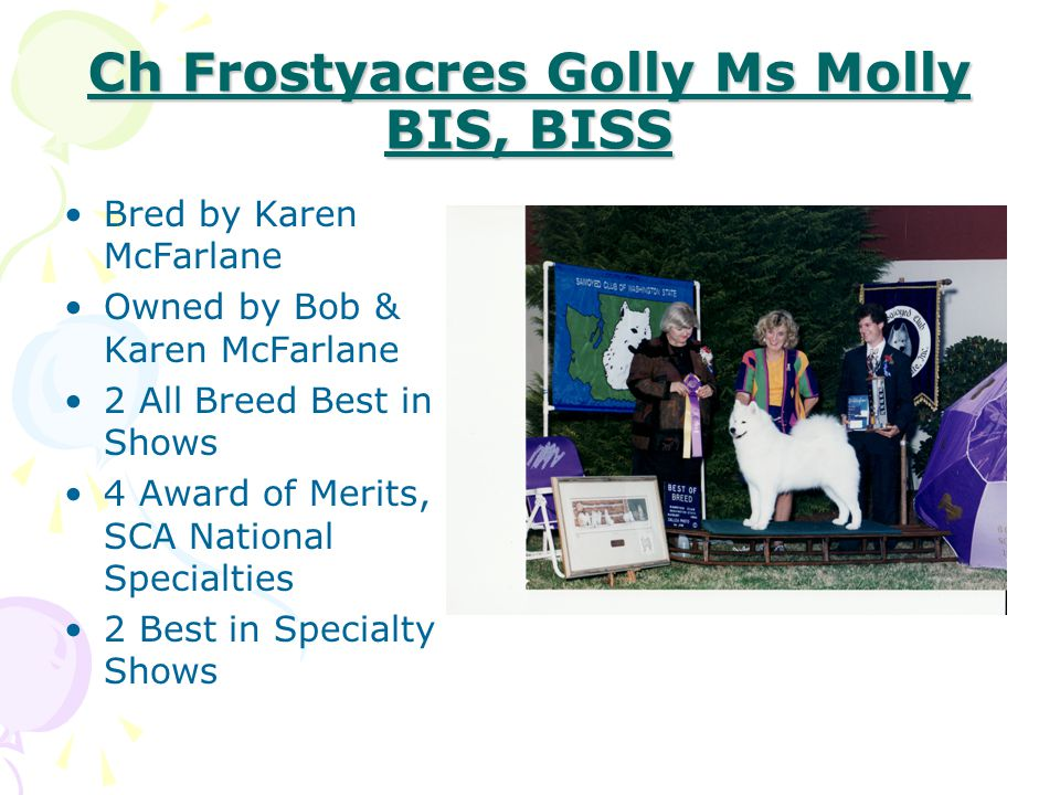 Ch Frostyacres Golly Ms Molly BIS, BISS
