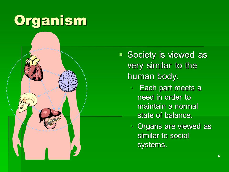 Organism Society is viewed as very similar to the human body.