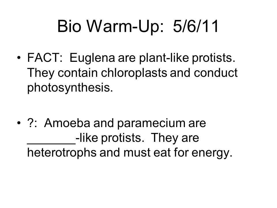 Bio Warm-Up: 5/6/11 FACT: Euglena are plant-like protists. They contain chloroplasts and conduct photosynthesis.
