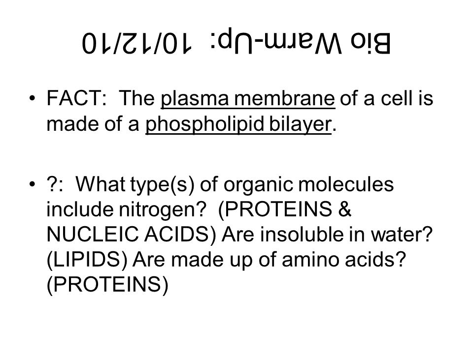 Bio Warm-Up: 10/12/10 FACT: The plasma membrane of a cell is made of a phospholipid bilayer.