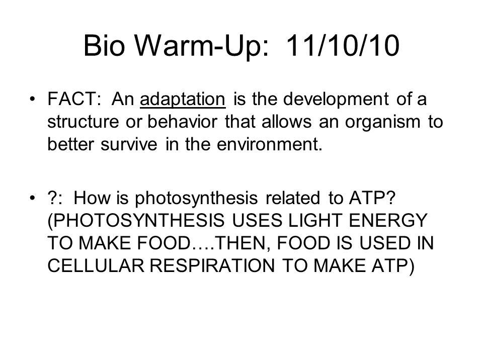 Bio Warm-Up: 11/10/10