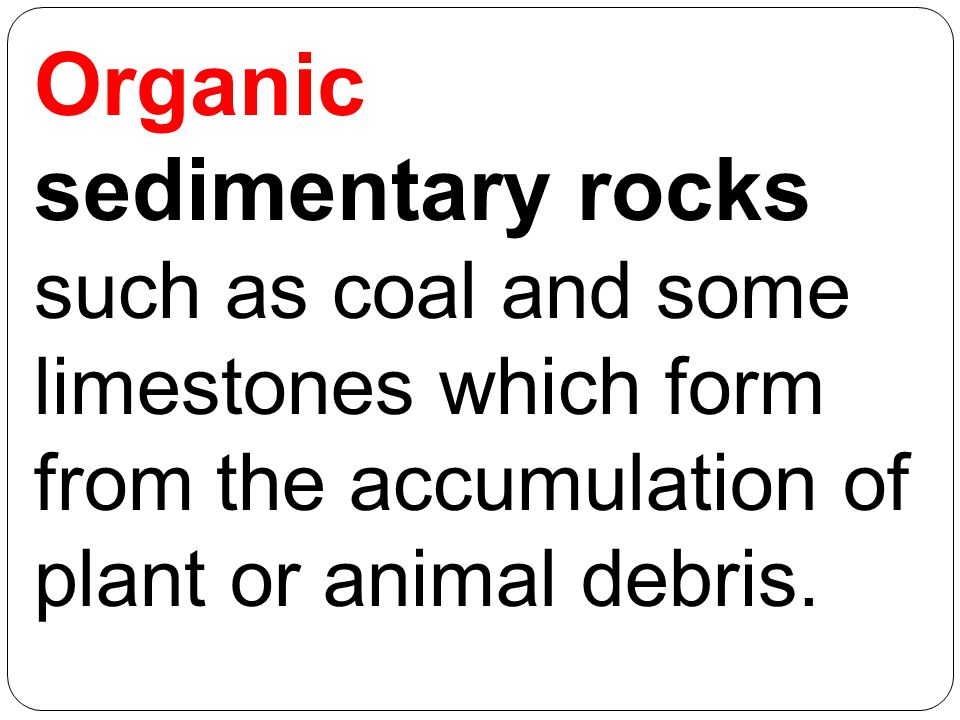 Organic sedimentary rocks such as coal and some limestones which form from the accumulation of plant or animal debris.