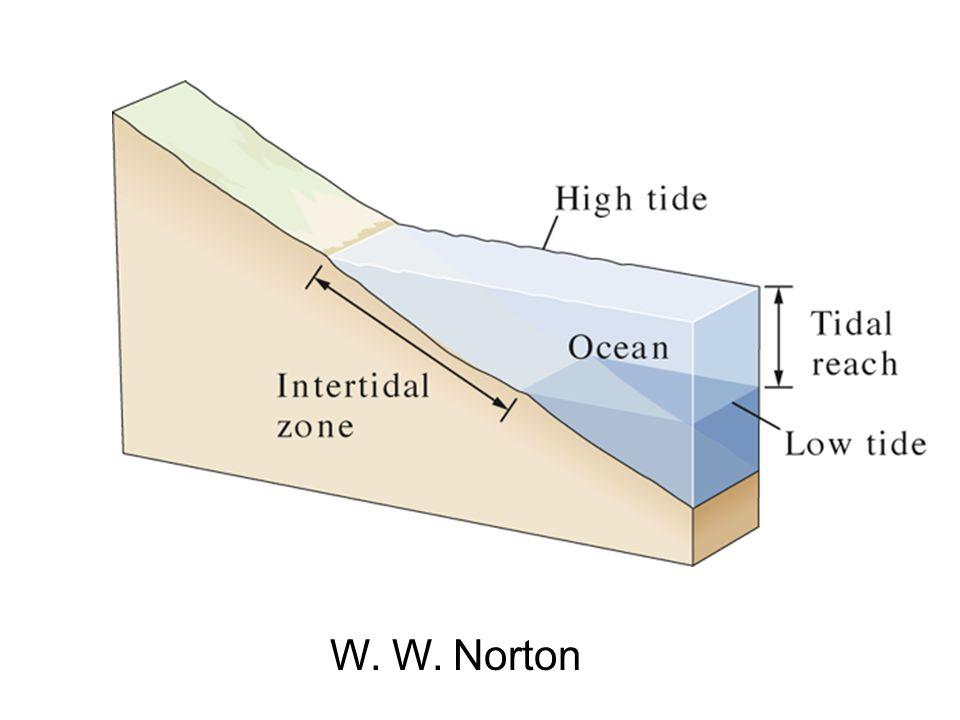 W. W. Norton