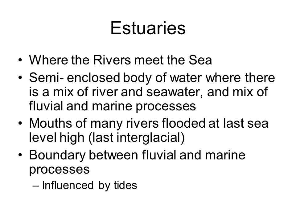Estuaries Where the Rivers meet the Sea