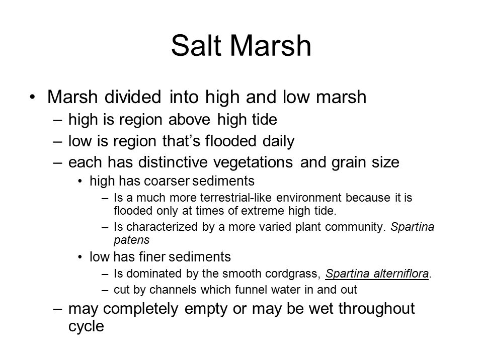 Salt Marsh Marsh divided into high and low marsh