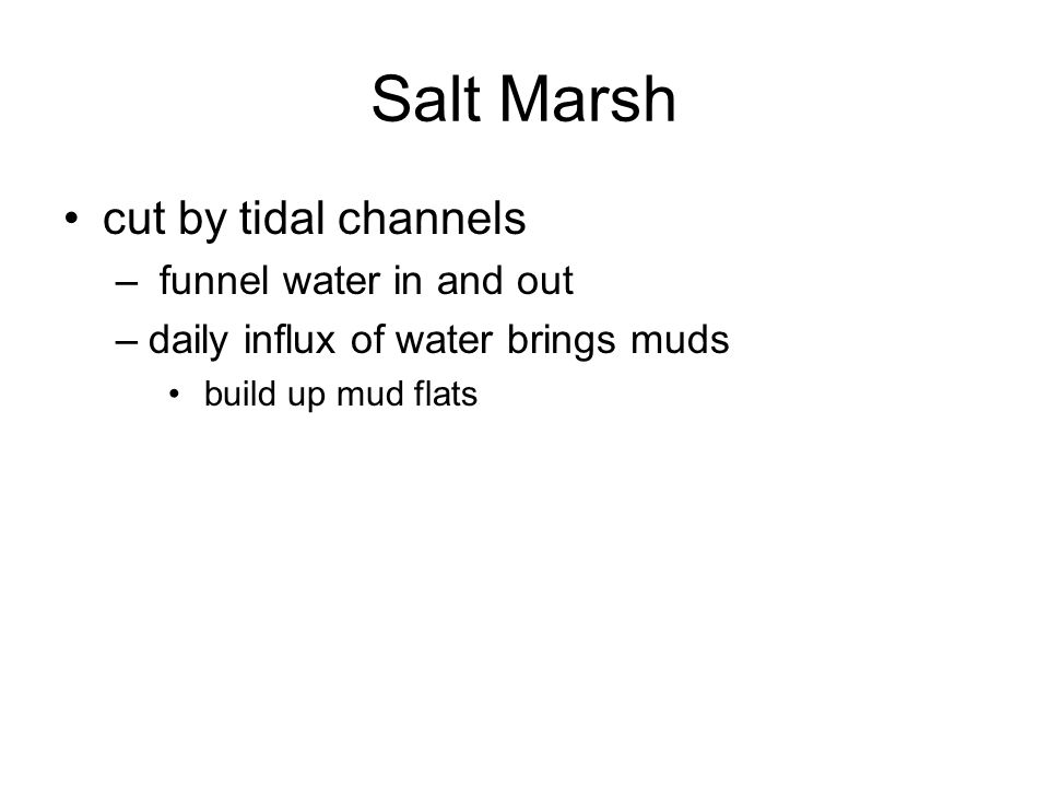 Salt Marsh cut by tidal channels funnel water in and out
