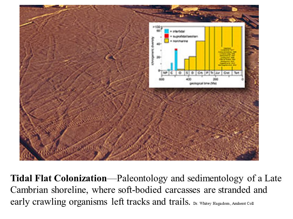 Tidal Flat Colonization—Paleontology and sedimentology of a Late Cambrian shoreline, where soft-bodied carcasses are stranded and early crawling organisms left tracks and trails.