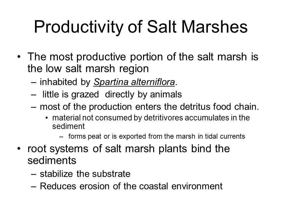 Productivity of Salt Marshes