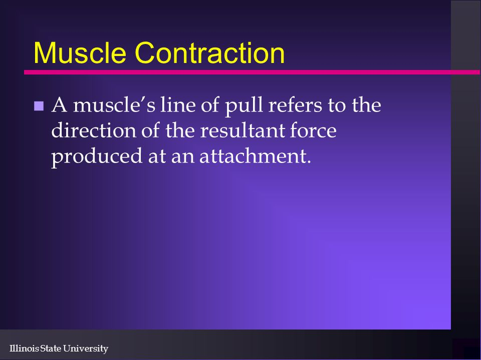 Muscle Contraction A muscle's line of pull refers to the direction of the resultant force produced at an attachment.