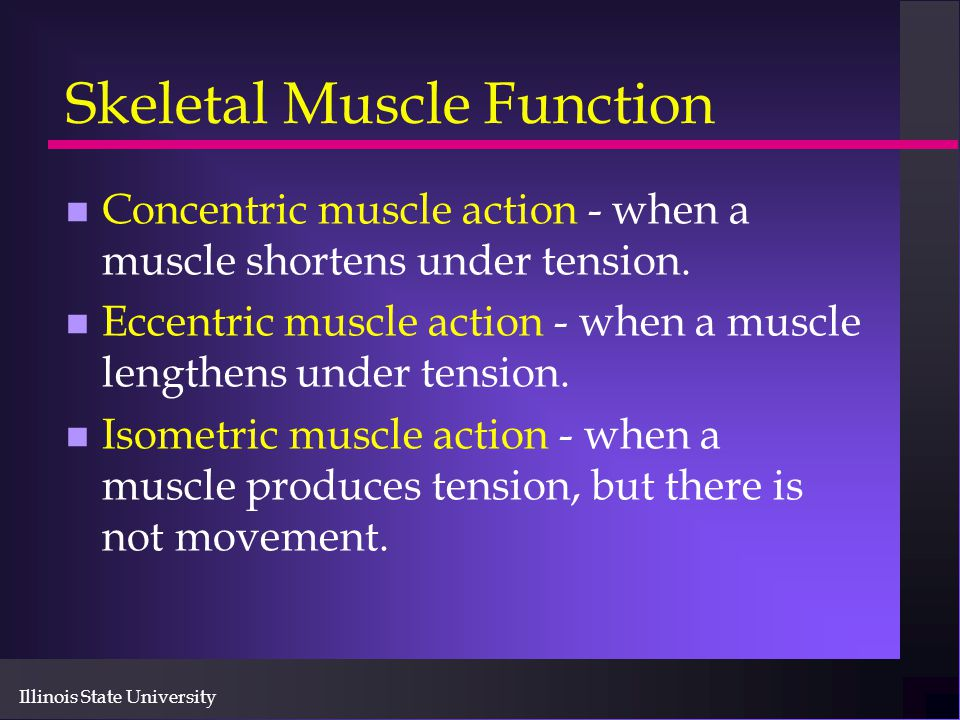 Skeletal Muscle Function