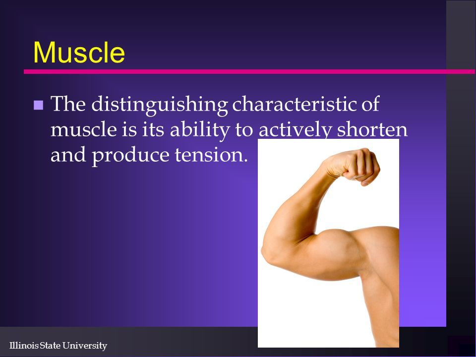 Muscle The distinguishing characteristic of muscle is its ability to actively shorten and produce tension.