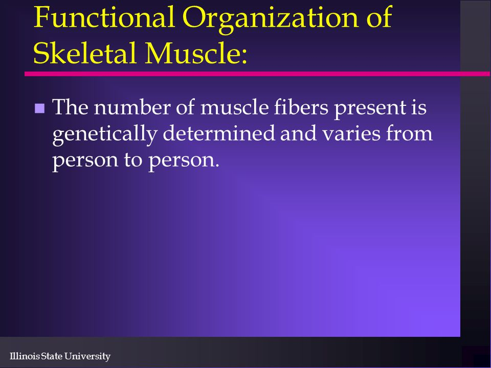 Functional Organization of Skeletal Muscle: