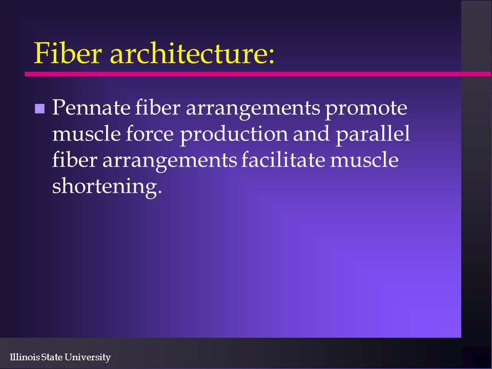 Fiber architecture: Pennate fiber arrangements promote muscle force production and parallel fiber arrangements facilitate muscle shortening.